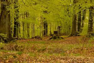 Lindum skov
